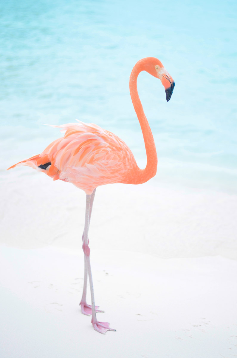 Flamingo Love Mckenna Bleu