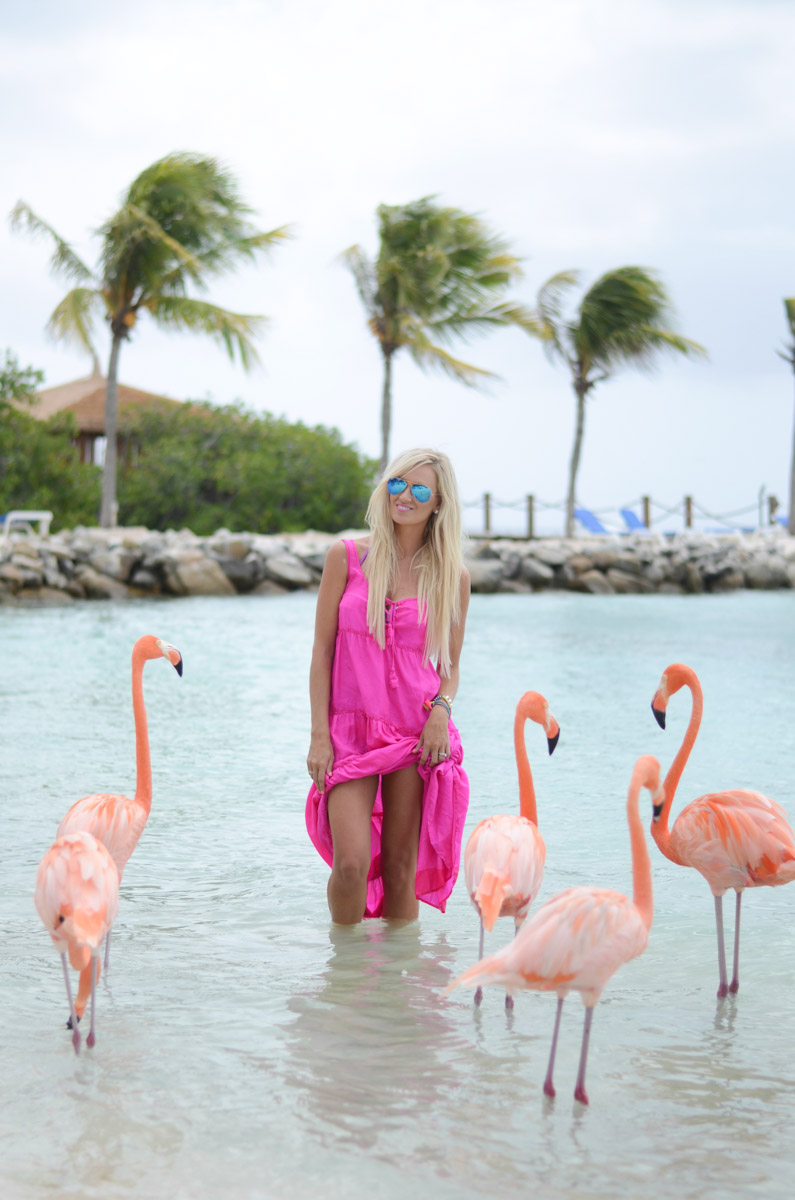Flamingo Love Mckenna Bleu