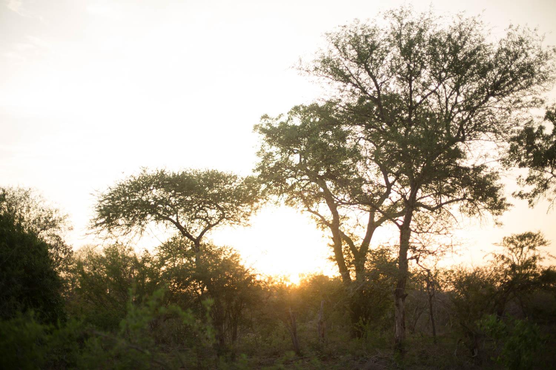 McKenna_Bleu_Fashion_Blog_Travel_South_Africa_Lions_sands_Kruger_Park_photo-316