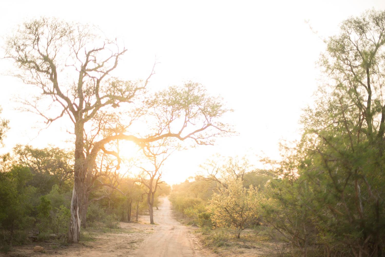McKenna_Bleu_Fashion_Blog_Travel_South_Africa_Lions_sands_Kruger_Park_photo-320