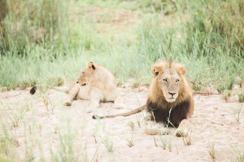 McKenna_Bleu_Fashion_Blog_Travel_South_Africa_Lions_sands_Kruger_Park_photo-337
