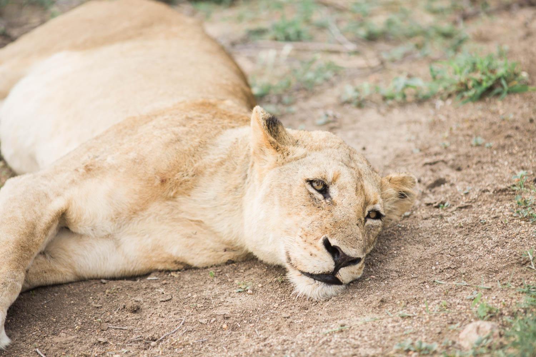 McKenna_Bleu_Fashion_Blog_Travel_South_Africa_Lions_sands_Kruger_Park_photo-355