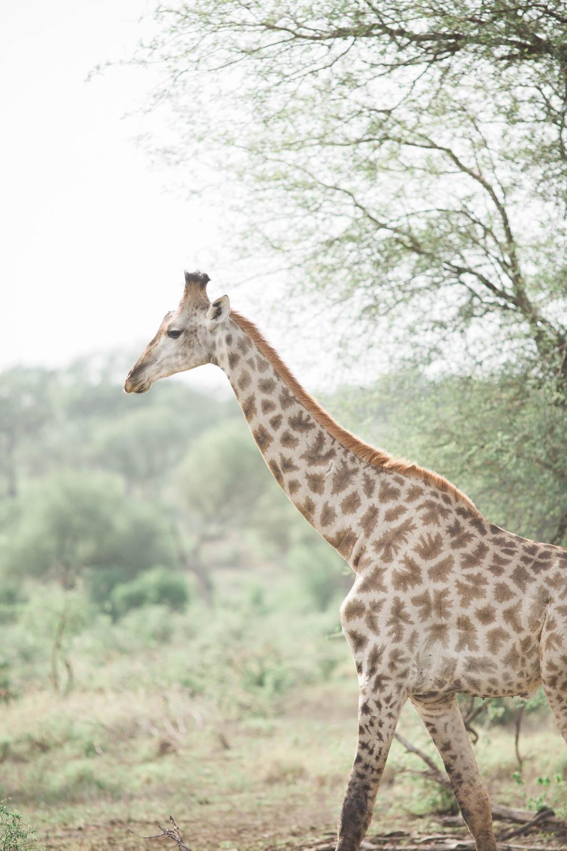 McKenna_Bleu_Fashion_Blog_Travel_South_Africa_Lions_sands_Kruger_Park_photo-394