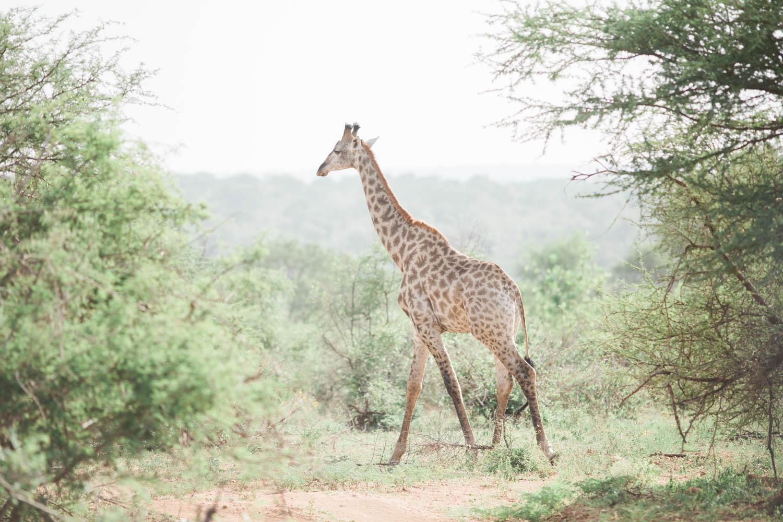 McKenna_Bleu_Fashion_Blog_Travel_South_Africa_Lions_sands_Kruger_Park_photo-395