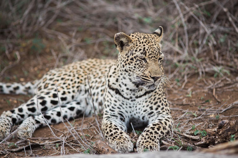 McKenna_Bleu_South_Africa_Lion_Sands_Kruger_Park_photo-145
