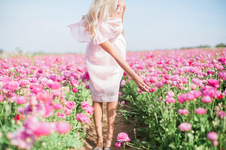 Pink bow dress flower fields mckenna bleu pink bow dress flower fields mightylinksfo