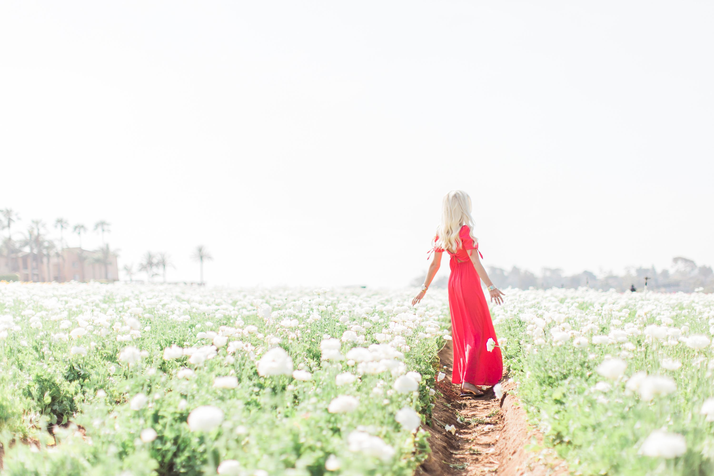Karlee Kloss Express Dress